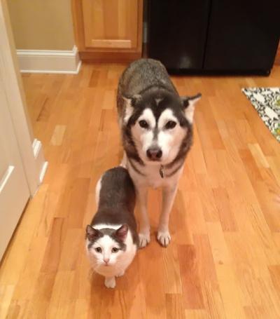 Animais de espécies diferentes que podiam ser irmãos