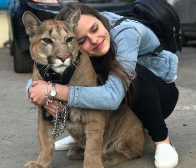 Casal russo compartilha sua casa com um leão da montanha adulto
