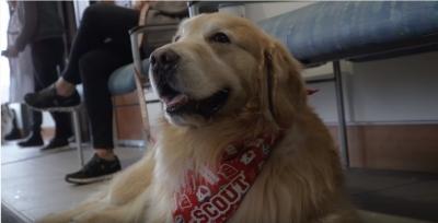Americano paga comercial para agradecer a veterinários que salvaram seu cachorro