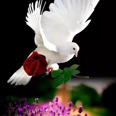 A paz que você reclama,depende de você. Preste atenção!