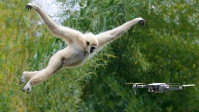 Animais Vs Drones