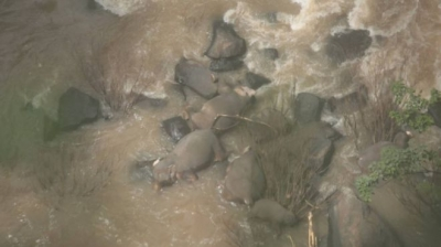 Seis elefantes morrem ao tentar salvar filhote em cachoeira na Tailândia