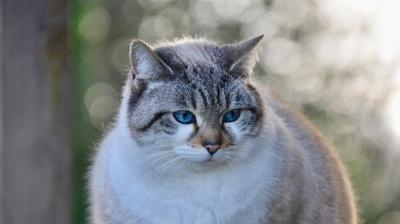 Tipos de doenças mais comuns em gatos