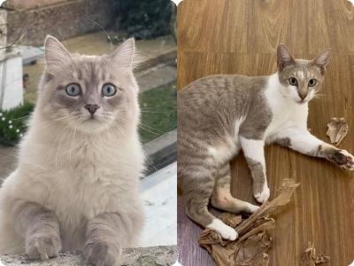 16 Vezes que as pessoas voltaram para casa e descobriram que tinham um gato