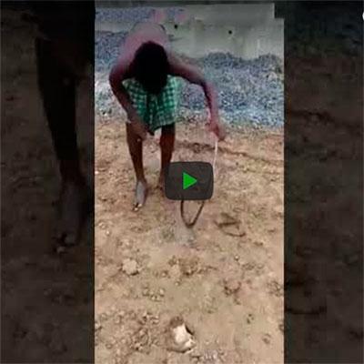 Por isso que é perigoso brincar com uma cobra