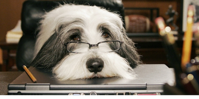 Cachorro não pode ser autor de ação de indenização