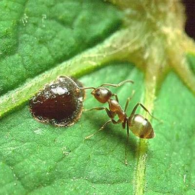 Fatos impressionantes que você não sabe sobre formigas