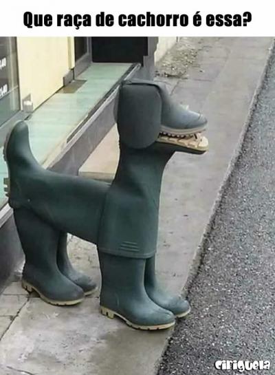 Que raça de cachorro é essa?