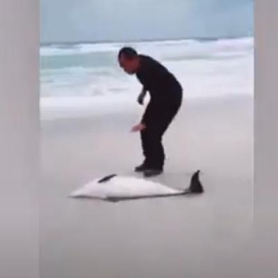 Homem salva golfinho encalhado em praia na Tunísia