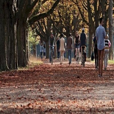 Estudos comprovam benefícios da caminhada