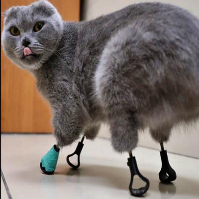 Conheça a gata biônica que teve as patas substituídas por próteses de titânio