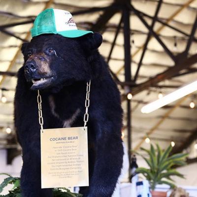Urso que ingeriu 30 kg de cocaína vai ganhar filme