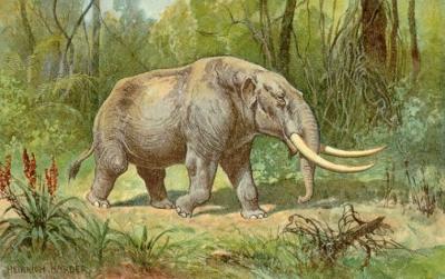 Mudanças climáticas, e não primeiros humanos, causaram extinção de mamutes, diz