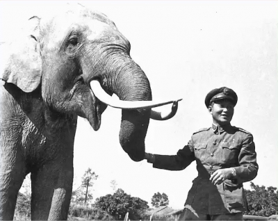 Os maiores guerreiros do mundo animal #5