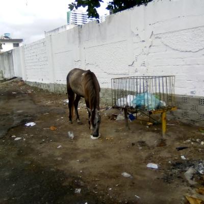 Cavalo comendo lixo