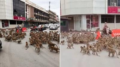Gangues de macacos: Primatas se encontram e brigam em rua da Tailândia
