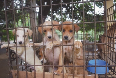 Cachorros incomodam moradores