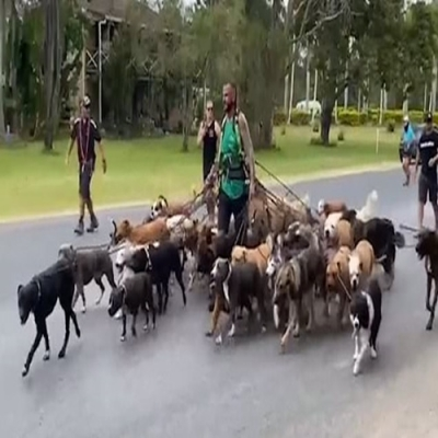 Homem quebra recorde mundial ao passear com 55 cães