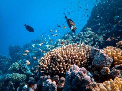 Recifes de coral evitam mais de US$5,3 bilhões em danos de potenciais enchentes