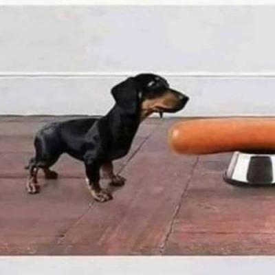 A origem do doge salsicha