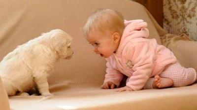 Esses cães são os melhores amigos desses bebês