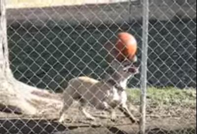 O cachorro equilibrista