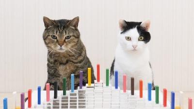 Gatos e dominós, o que poderia dar errado?