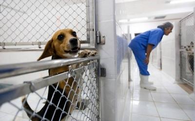 Campanha sugere que americanos troquem armas por cães adotados
