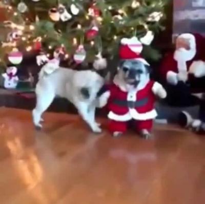 Cenas fortes de Papai Noel sendo agredido