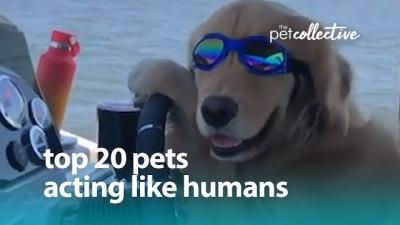 Veja alguns animais que decidiram agir como humanos