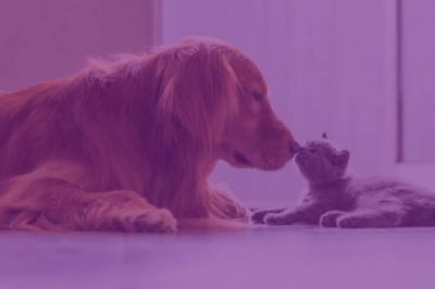 Pet shop online Petlove recebe R$ 250 milhões do Softbank
