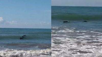 """Pescador vê """"tronco"""" flutuando e fica surpreso ao descobrir que era um crocodilo"""