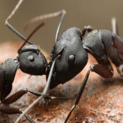 Como os insetos se comunicam?