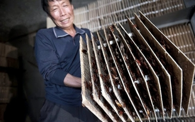 Imagens mostram coisas que só acontecem na China