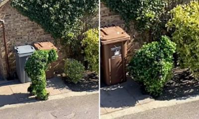 Homem se disfarça de arbusto para sair na quarentena