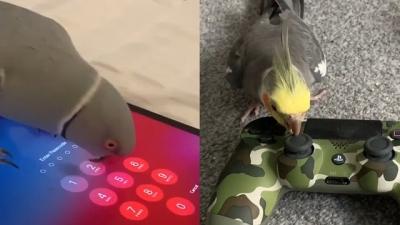 Aves Vs Tecnologia, quem ganha?