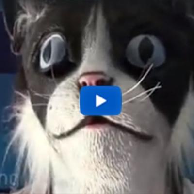 Miau, miau – cabeça de gato assustando gatos