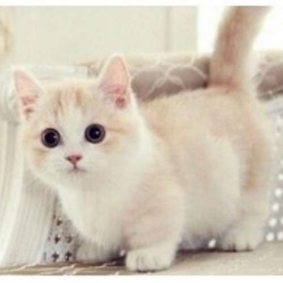 5 Raças De Gatos Para Se Apaixonar
