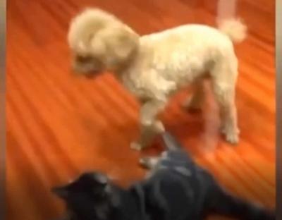 Um cachorro que manja das luta