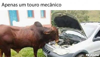 Apenas um touro mecânico