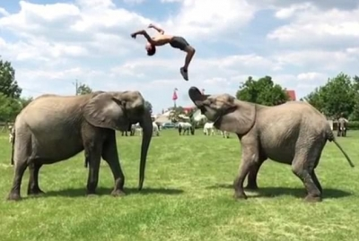 Homem e elefante mostram seus truques nessa coletânea