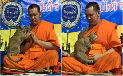 Gato testa a paciência de um monge