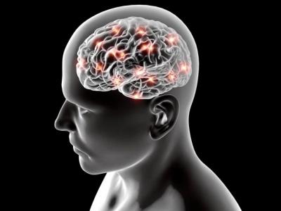 Pela primeira vez, imagens mostram como o cérebro aprende