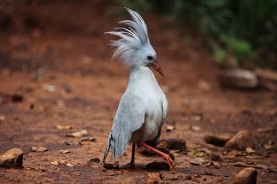 As espécies de pássaros mais raras do mundo