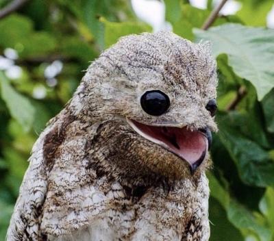 O canto dessa ave é uma coisa única
