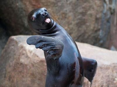 Animais que foram pegos de surpresa pelos fotografos