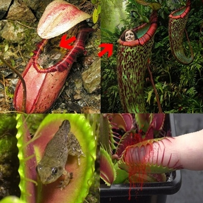 Top 5 das plantas carnívoras mais incríveis e curiosas