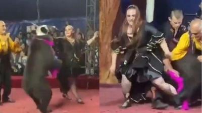 Urso ataca domadora 3 vezes em circo russo, mas apresentação continua