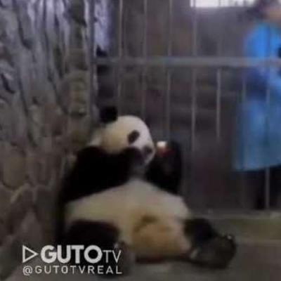 Um Panda que troca fácil de prioridades