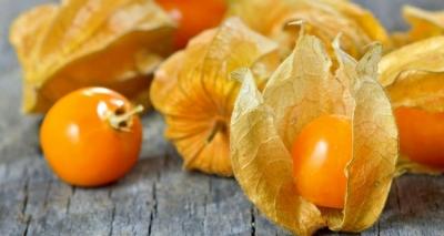 5 Benefícios da Fruta Fisális – Para Que Serve e Propriedades